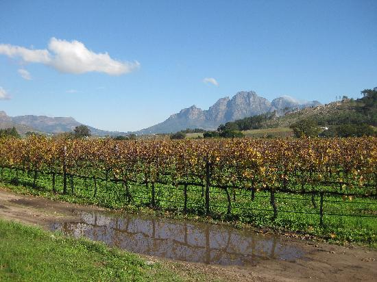 Lynx Wines: The view from Lynx