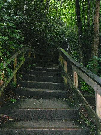 Mingo Falls Steps at start of trail
