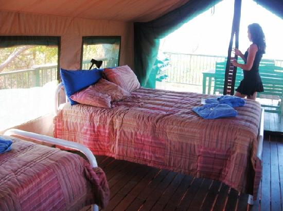 Kooljaman at Cape Leveque Safari Tent Accommodation & Safari Tent Accommodation - Picture of Kooljaman at Cape Leveque ...