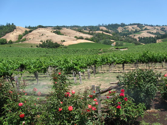 Navarro Vineyards: Beautiful setting