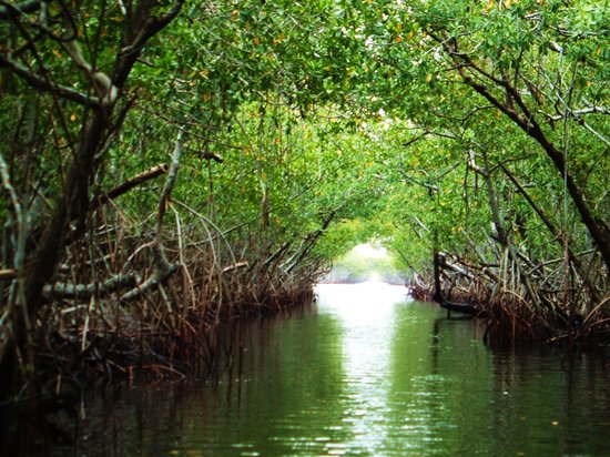 Everglades City, Floryda: Airboat Ride scenery