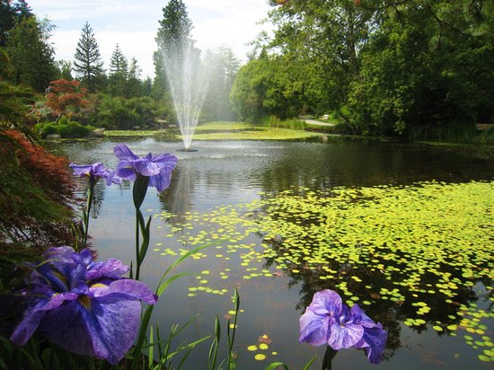 VanDusen Botanical Garden: water lilies, fountain