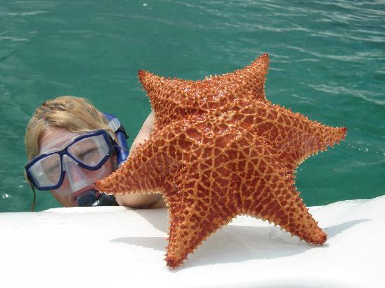 étoile De Mer à 6 Branches Picture Of Memories Caribe Beach
