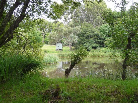 Mandinam: Duck pond next to the hut