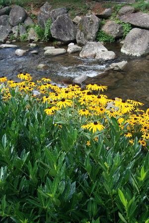 Garden Plaza Hotel Gatlinburg: Hotel mountain stream with flowers
