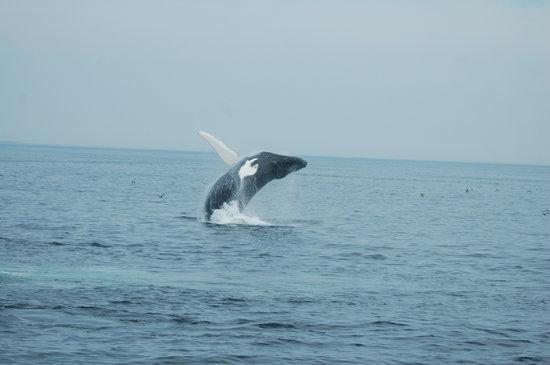 7 Seas Whale Watch: Nile