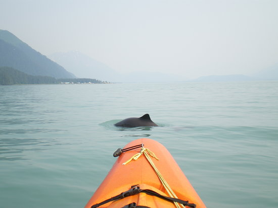 Sunny Cove Sea Kayaking: The porpoise in front of our kayak