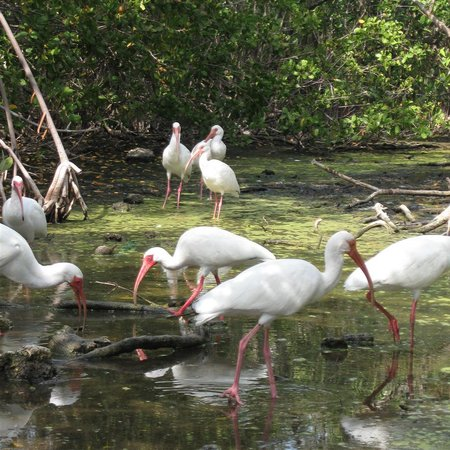 Florida Keys Wild Bird Rehabilitation Center: swamp