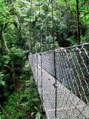 San Carlos, Costa Rica: Uno de los puentes colgantes