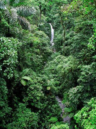 San Carlos, Costa Rica: Naturaleza Absoluta!