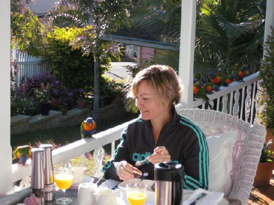Athelstane House: Breakfast with the Lorikeets