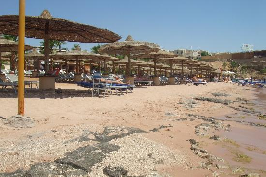 The Royal Savoy Sharm El Sheikh : Beach