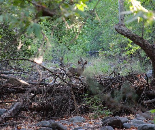 Creekside Inn at Sedona: Taking a morning stroll by the creek with Bambi