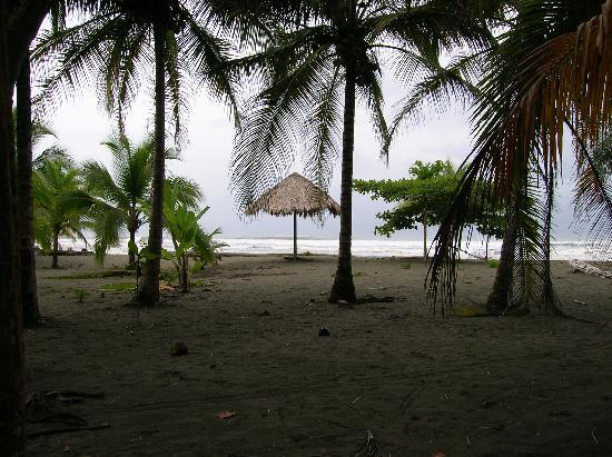 Hotel Playa Westfalia: palmeras en playa