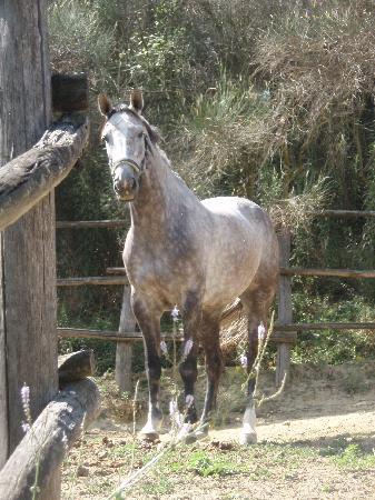 Santa Maria a Poneta: le bonheur des amateurs de chevaux