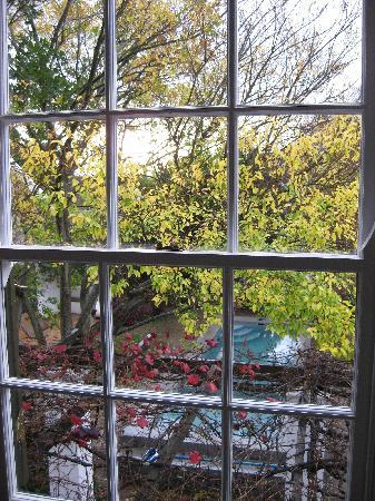 Akademie Street Boutique Hotel and Guest House: Looking out on the fall colours in the courtyard
