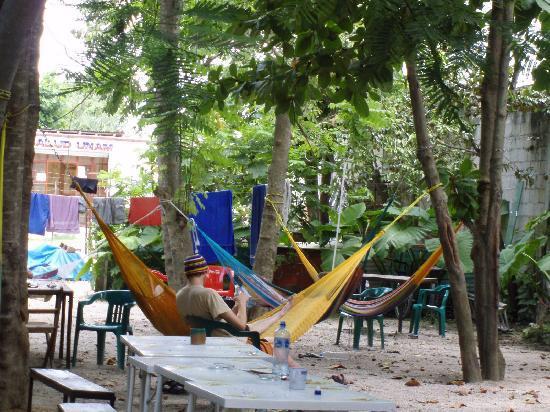 Weary Traveler Hostel: Hammocs