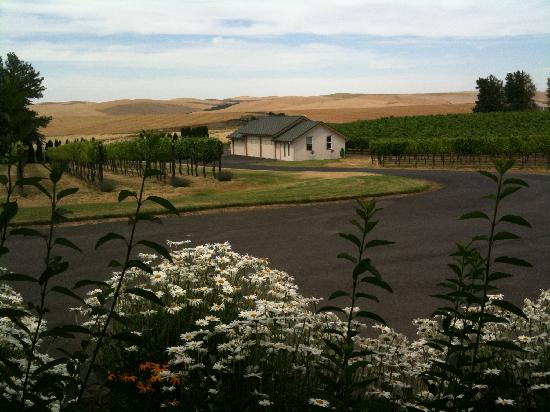 Walla Faces Inn at the Vineyard: our view from our patio