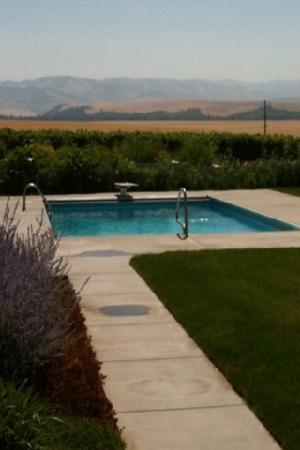 Walla Faces Inn at the Vineyard: saltwater pool and view