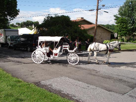 Lavender Patch Bed & Breakfast: we had a Horse drawn Carriage!
