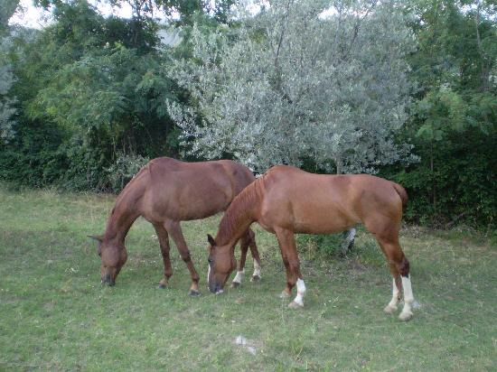 Podere le Pialle: Happy horses out grazing.