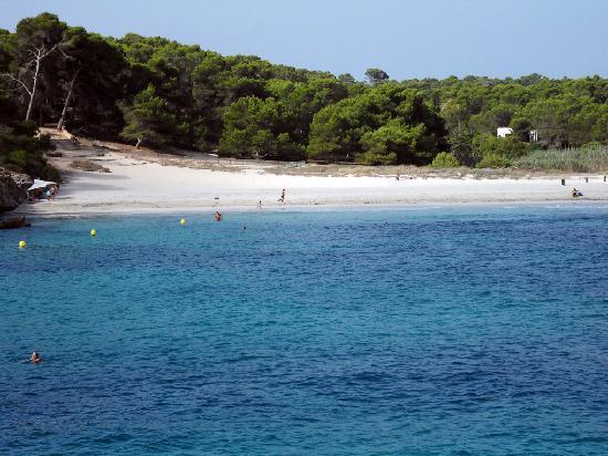 Playa de S'Amarador: vegetazione intorno