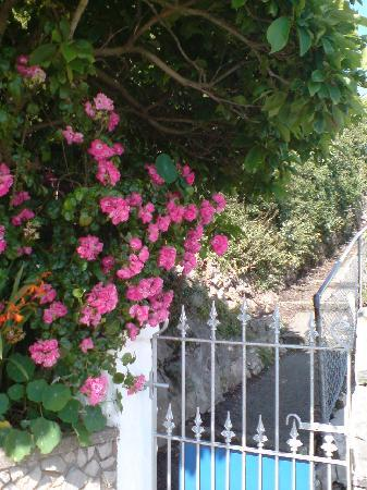 """Waverley Hotel: The entrance Gate and """"Old Worlde"""" Roses in the """"Waverley Terrace Garden"""" = the gate also leads"""