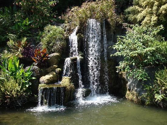 Los Angeles County Arboretum U0026 Botanic Garden: The Waterfall