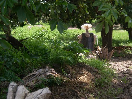 Banjul, Gambia: scarecrows were in a group of three