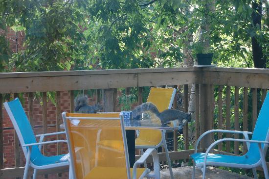 Le 9 et demi: Au petit matin deux visiteurs sur la terrasse