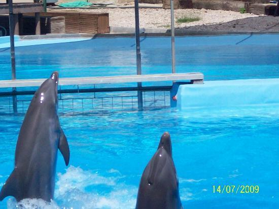 Selwo Marina Delfinarium: dolphins again
