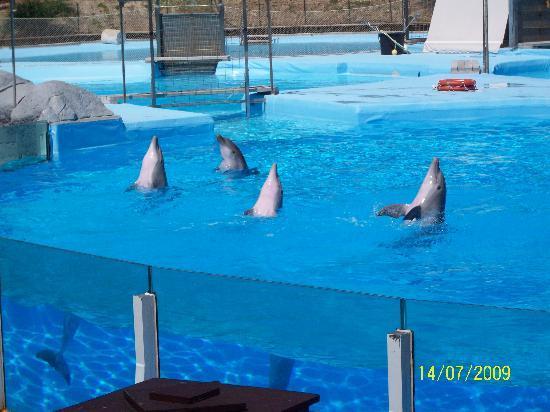 Selwo Marina Delfinarium: more dolphins