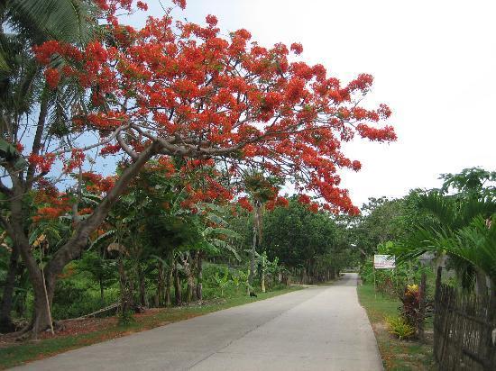 Alegre Beach Resort: pretty tree outside the resort