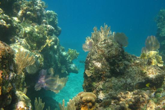 Bananarama Beach and Dive Resort: Snorkeling West Bay
