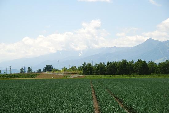 Furano La Terre: Reaching Farm Tomita from LaTerre via Fukuda Melon path