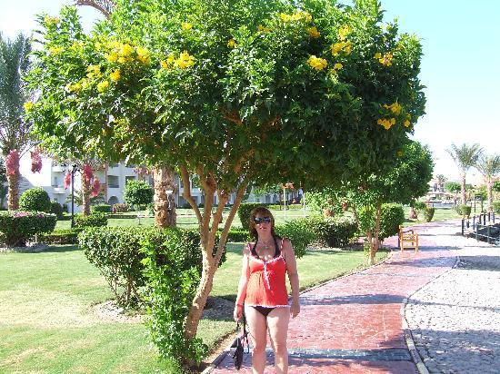 Lovely Gardens lovely gardens - picture of dana beach resort, hurghada - tripadvisor