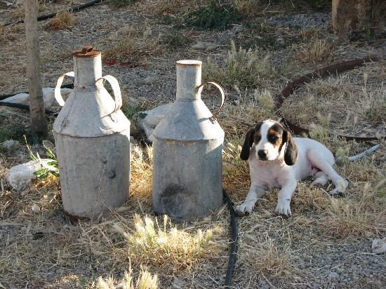 Casale di Riena Masserie Scramuzza Agriturismo: in the yard