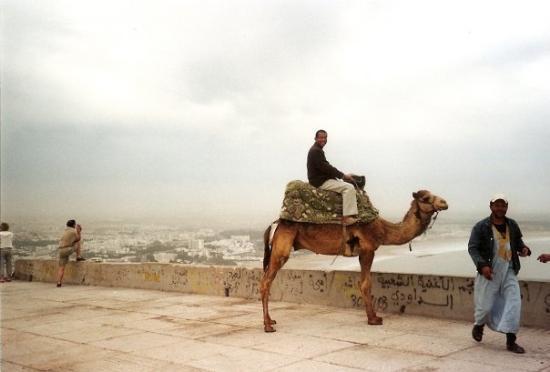 Agadir Beach: Balllade à dos de Chameau, sur les hauteurs d'Agadir. (Maroc)