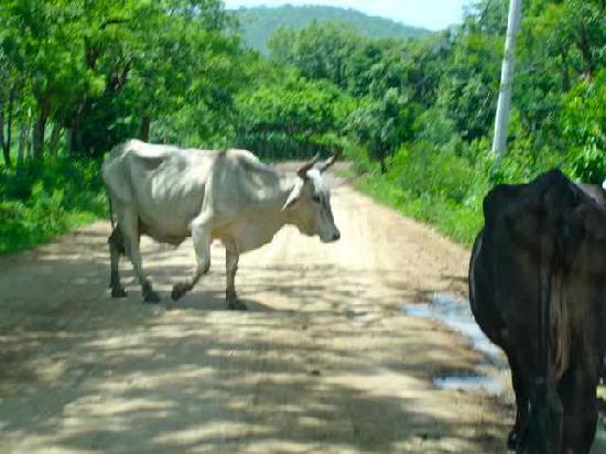 Las Mananitas: The Road less travelled
