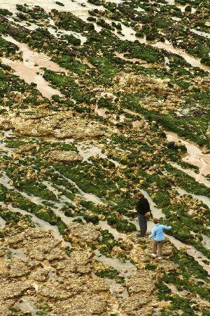 Beachy Head: on the beach