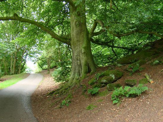 Shropshire, UK: hawkstone