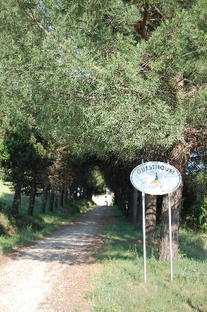 Fattoria Bassetto: Driveway