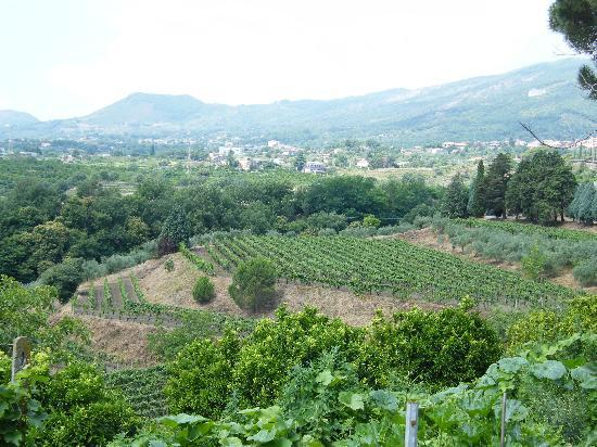 Monte Etna: View from the Winery