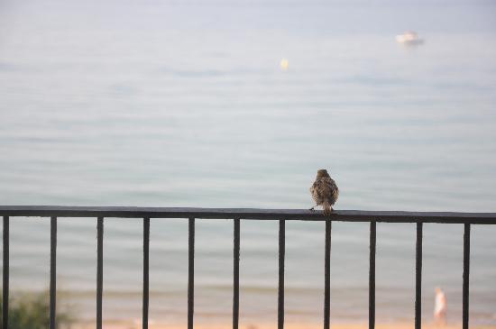 Hotel Terraza : Pajarito con vistas al mar