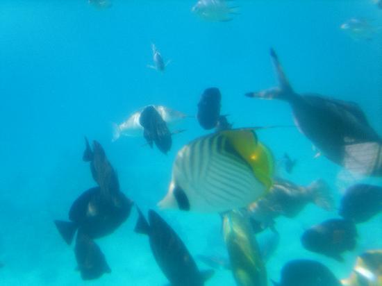 Delta Sharm Resort: submarine