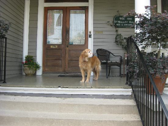 1896 O'Malley House Bed and Breakfast : cody ready to welcome you