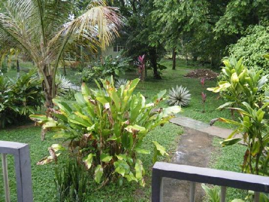 Midas Belize: View from my hammock