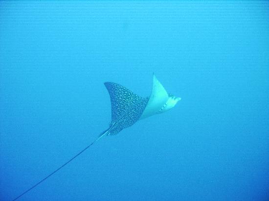 Ambergris Divers: Just pass'n through..