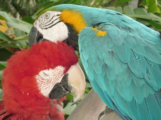 Bali Safari & Marine Park: amazing and beautiful birds