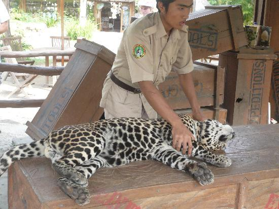 Bali Safari & Marine Park: this guy had an amazing relationship with this pet!